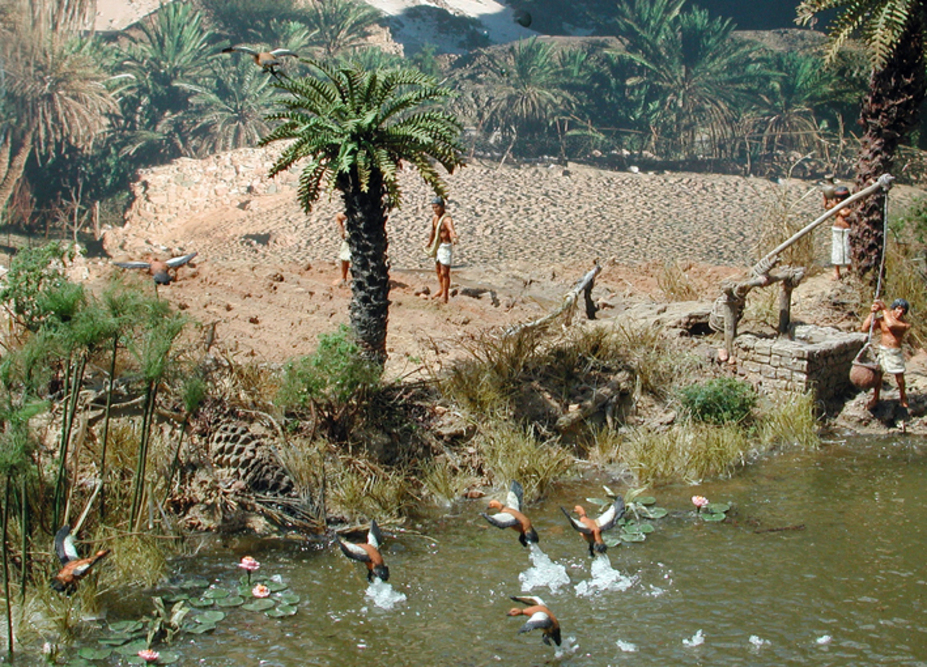 Duck hunting at the river Nile Small 8