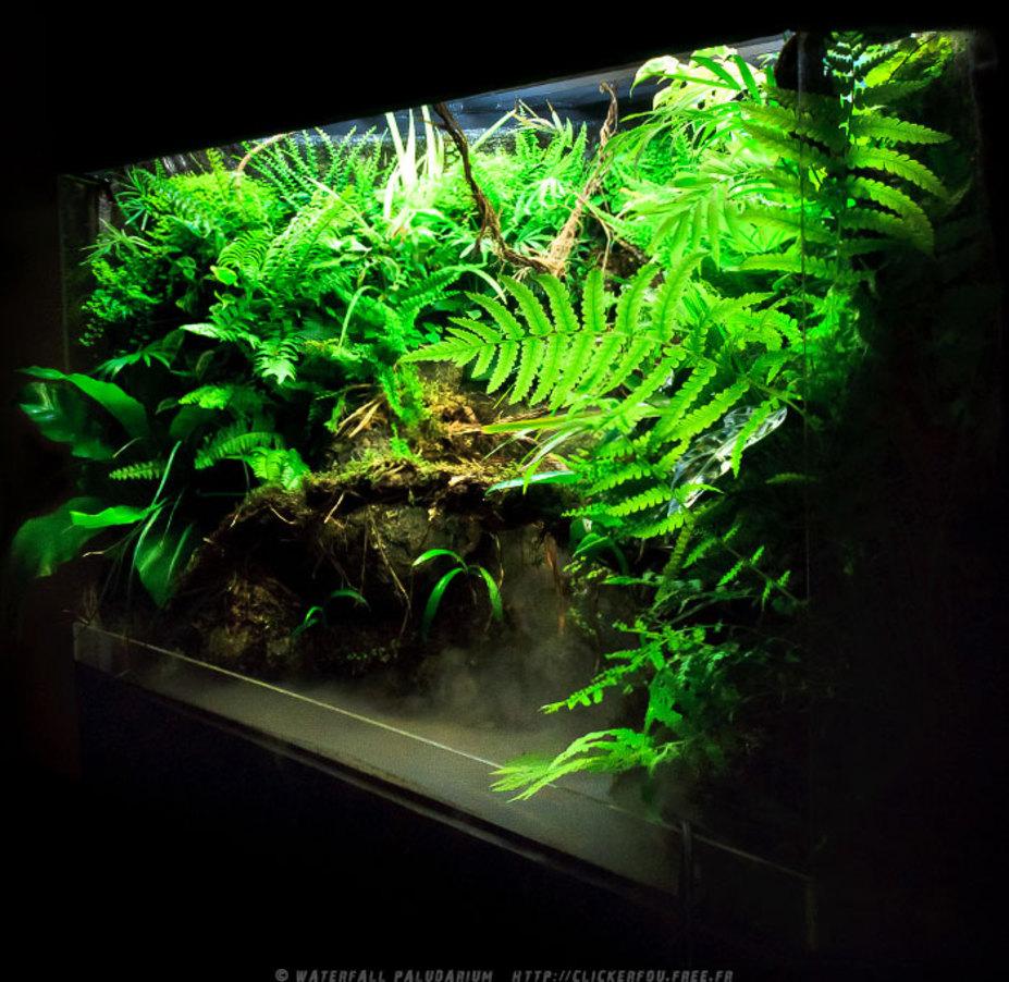Miniscaping Waterfall Paludarium By Spirit Of Jungle