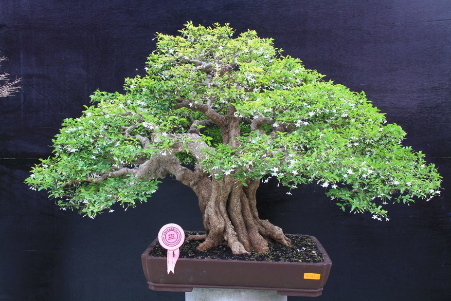 white flower bonsai