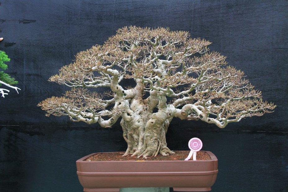 Bonsai Great Ramification