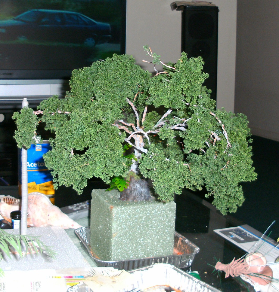 My first life sized Bonsai Small