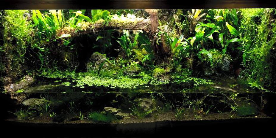 Paludarium Tropical