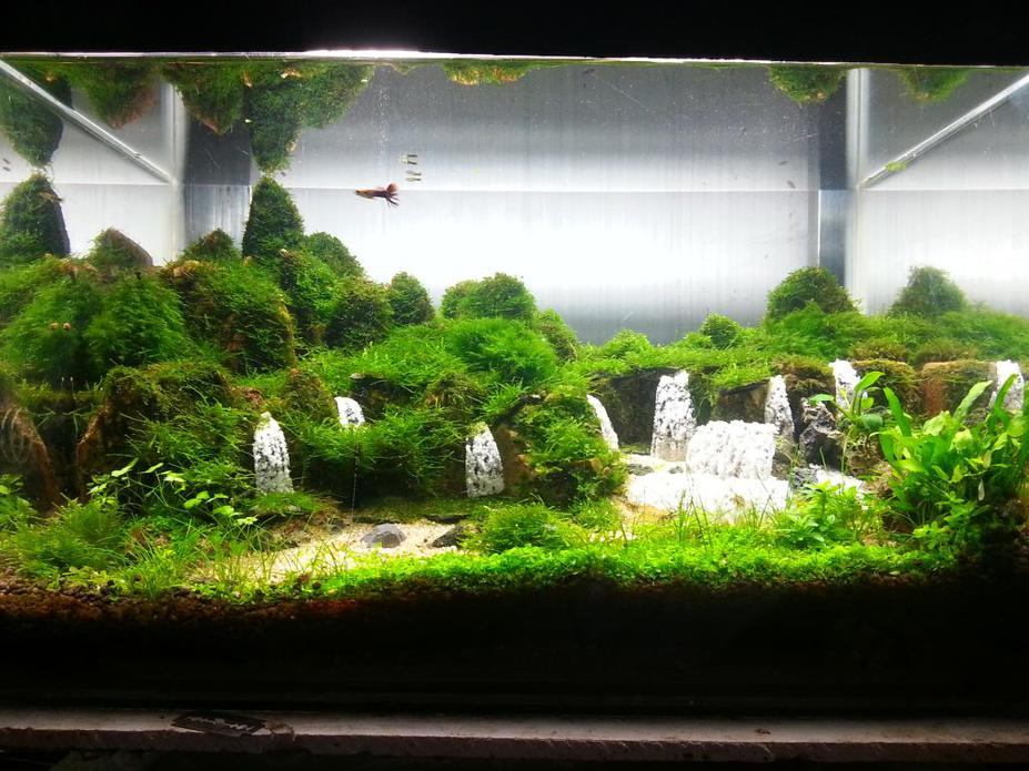 Aquascaping waterfalls for Aquarium waterfall decoration