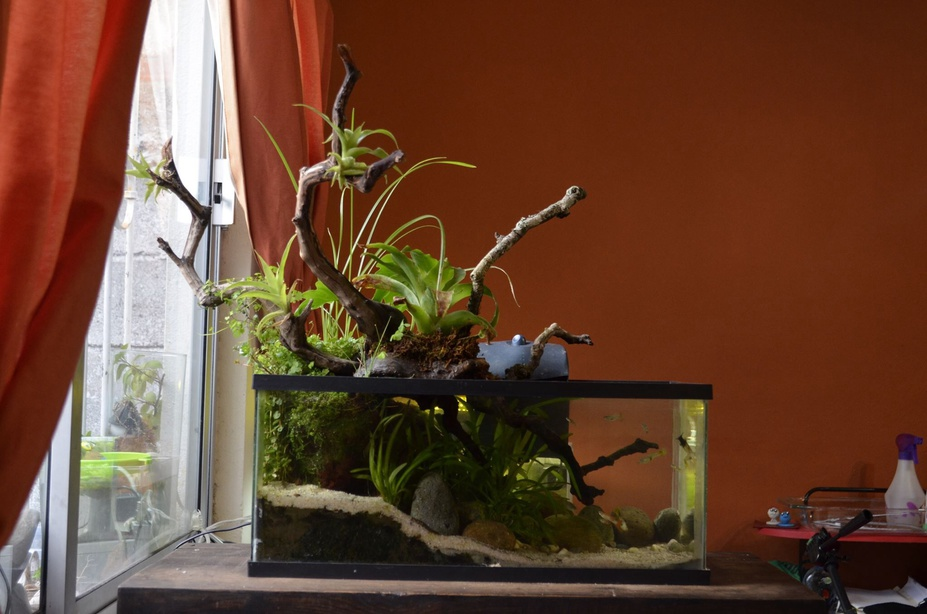 My first paludarium
