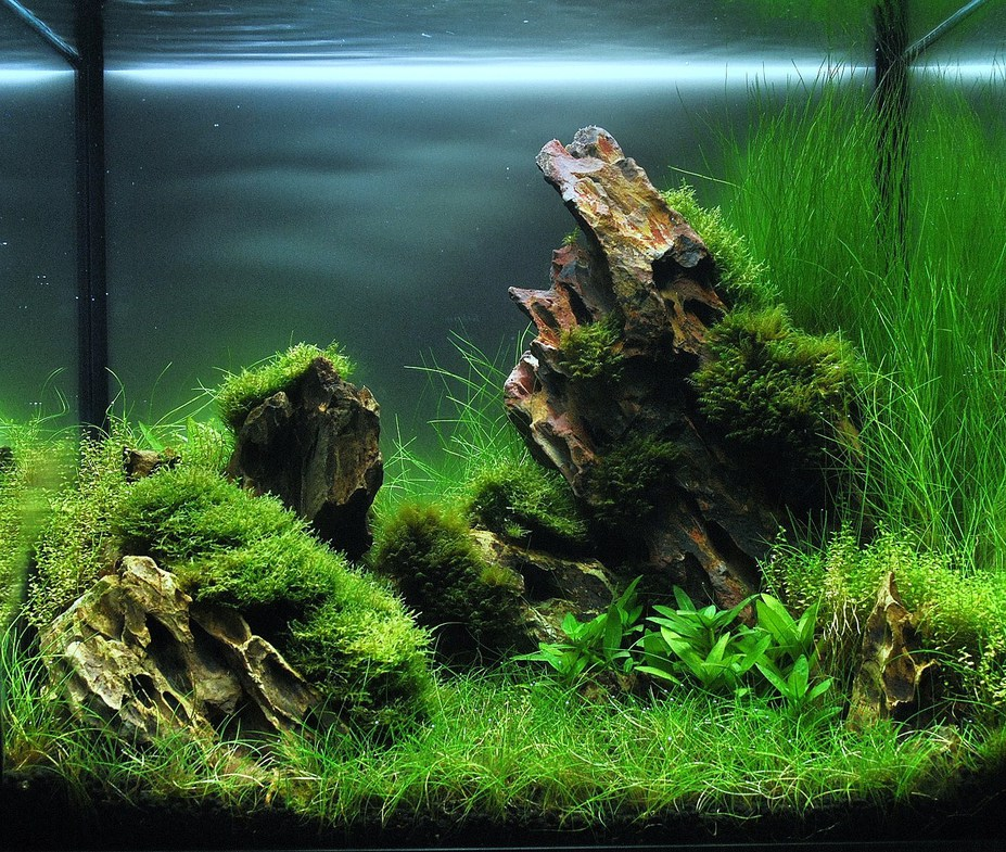 "23L ""The Rocky Plain"" Small"