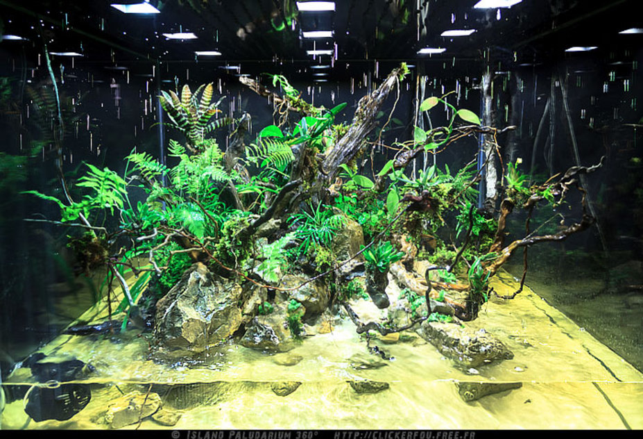 Building an island 360 Paludarium with artificial climate system