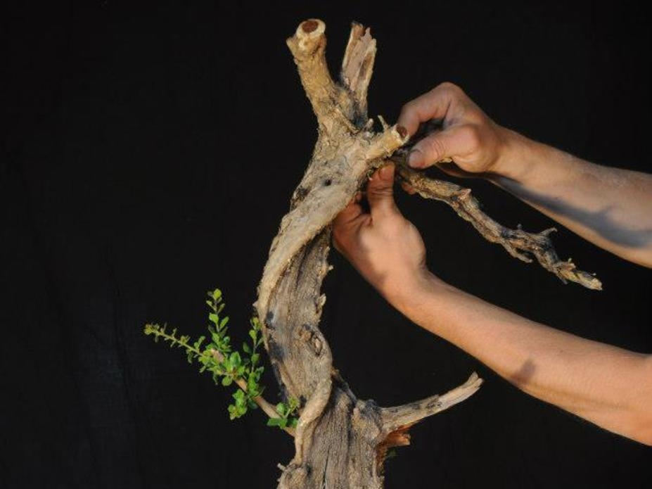 Attaching deadwood branches