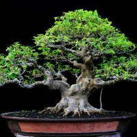 Miniscaping inspire the world for Unusual bonsai creations